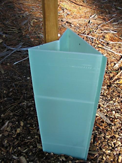 Triangular /circle shape pp corflute tree guards seeds production avoid kangaroo