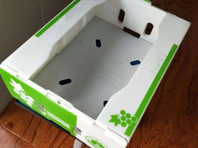 fresh okra packing box China pp corflute foldable packing boxes manufacturer Qingdao Hengsheng Plastic