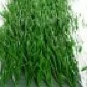 Emulational Withered Sapless Blasted Hybrid Artificial Turf Fake Landscape Grass.