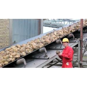 Sugar Belt Conveyor Systems for Sugar Mill
