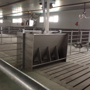 Stainless Steel  Single/double sided nursery pig feeders for pig farm- feeder equipment