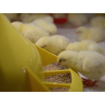 Europe design Plastic broiler poultry feed pan