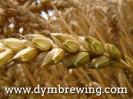 Adjuntos para la producción de cerveza - trigo