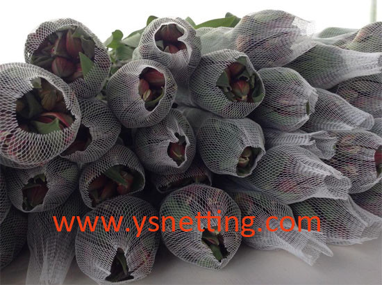 bud net for Alstroemeria
