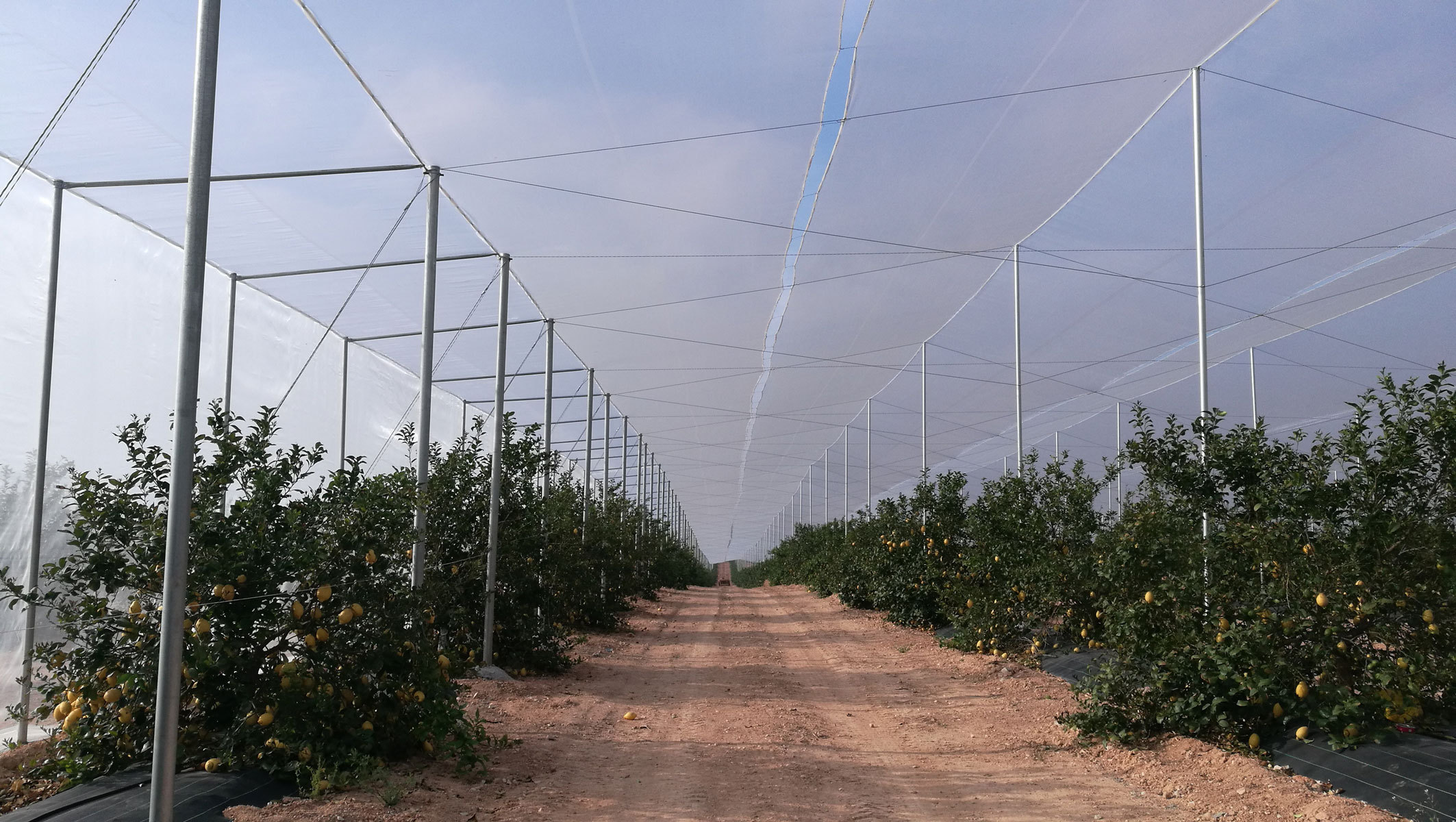citrus tree netting