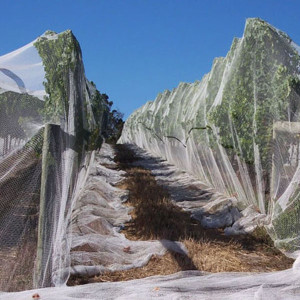 Bee netting for citrus growing with UV 5years waranty manufactured by customers' specifications