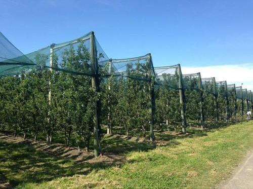 Lejos Pesticida, consiga más fruta orgánica!
