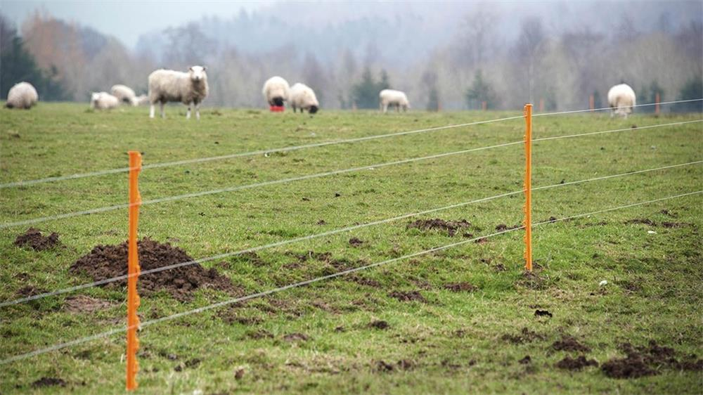 the common reasons why the electric fence does not work and how to check it