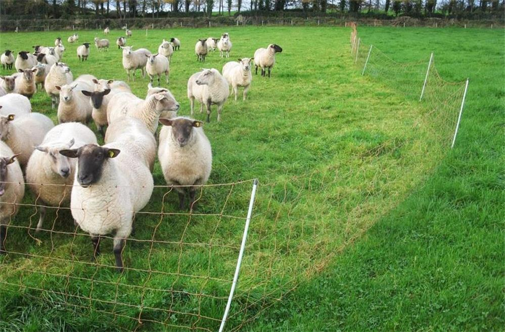 the precautions and safety tips for installing electric fences