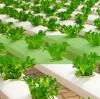 Plant grow dehumidifiers.  EAST DEHUMIDIFIERS for global dehumidifiers OEM, ODM.