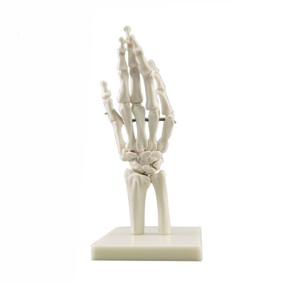 Anatomical human foot joint skeleton model with ligament, PVC bone model